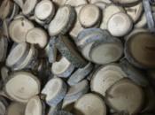 Bottoni-legno-abete-bianco